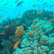 Amazing Diving Vacation