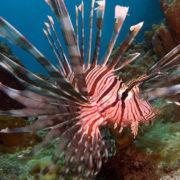 Amazing Fiji Scuba Diving