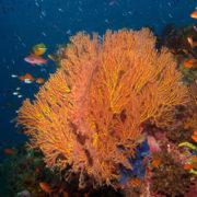 Best Fiji Dive Sites