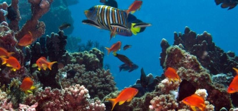 Best Fiji Scuba Dive Spots