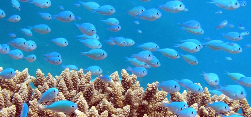 Great Snorkeling in Fiji