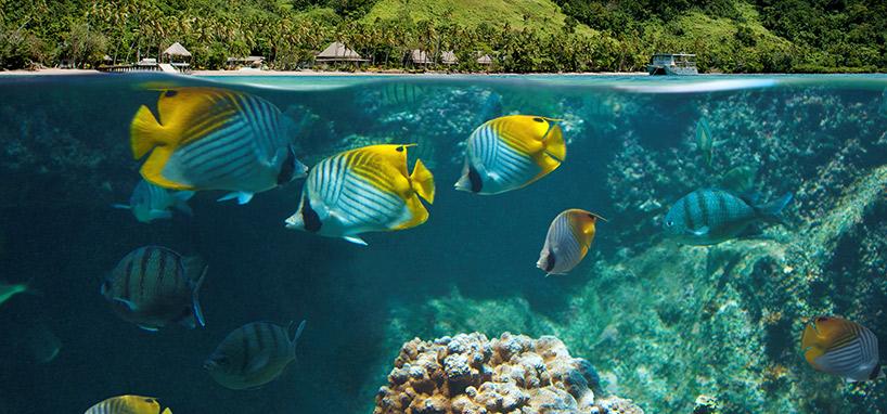 House Snorkeling in Fiji
