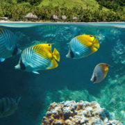 House Snorkeling in Fiji