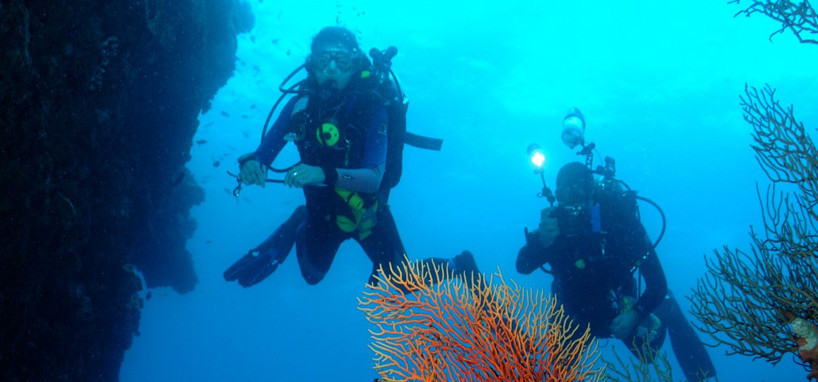 Fiji Diving Vacation 4 Star About Fiji Travel Packages