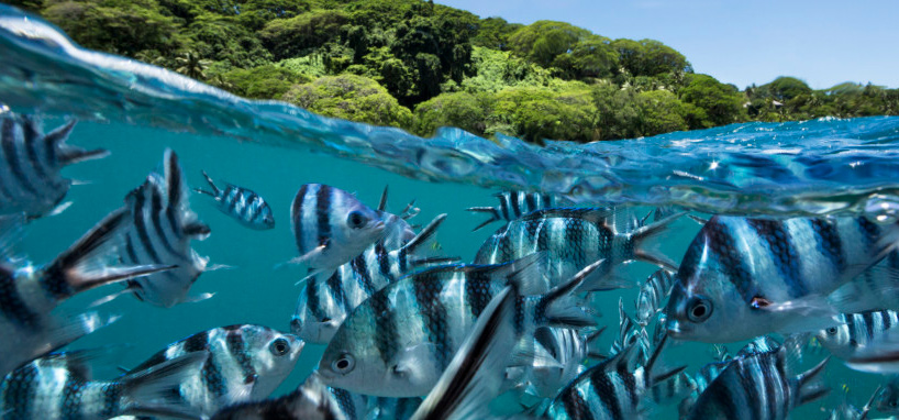 Snorkel in Fiji