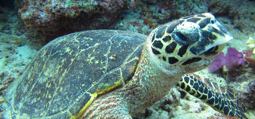 Wildlife in Fiji