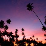 Fiji Travel Agent Review