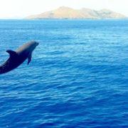 Travel Fiji by Sea