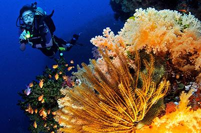 Diving Fiji Destinations