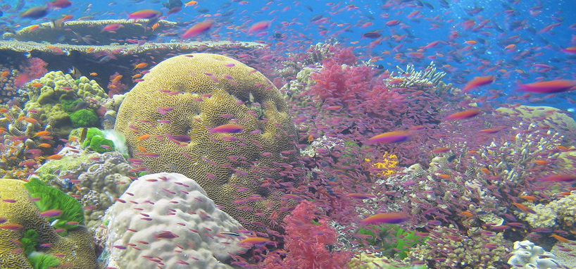 Colorful Coral in Fiji